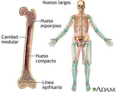 Clasificación de los huesos – Blog de Osteología